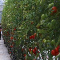 La colaboración y el enfoque ciudadano son clave para una óptima nutrición