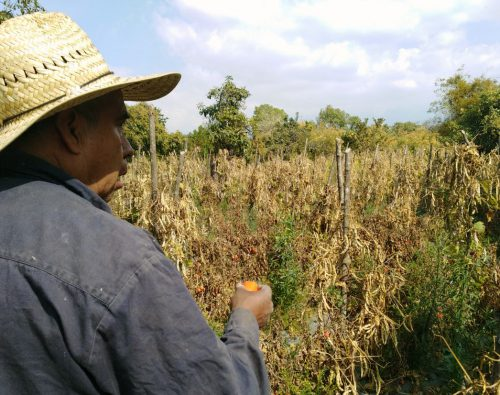 Campesinos sobreviven de milagro; 70 mil realizarán marcha el 22 de febrero en Toluca
