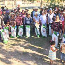 Entregan semilla de maíz mejorada a pequeños productores de Lagos de Moreno