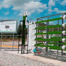 Diseña la UAM biorreactor de microalgas para la captura de dióxido de carbono