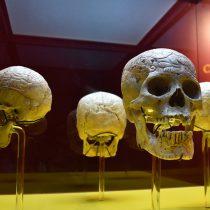 El Museo de Arte Popular exhibe cuatro de los 10 cráneos que resguarda la Casa del Mendrugo, en la ofrenda que realiza el recinto
