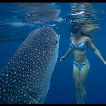 Nado con tiburón ballena, una experiencia inolvidable, solo en BCS