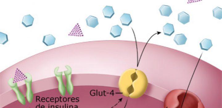 Diabetes tipo 1, posiblemente relacionada con salud de microbiota intestinal