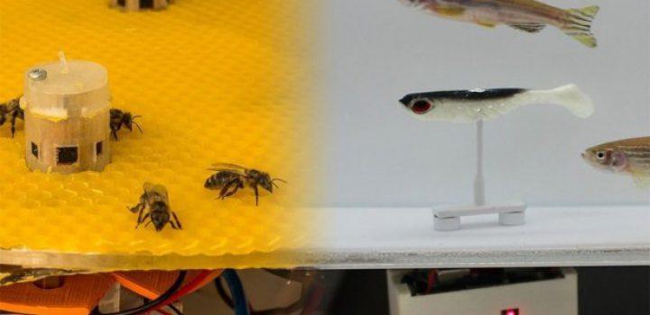 Robots logran que las abejas y los peces se comuniquen