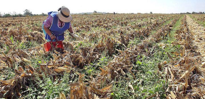Minifundio, rezago tecnológico y crisis agrícola