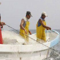 Marina recupera redes que dañan especies marinas