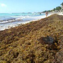 Mujer queda atrapada en sargazo de Playa del Carmen