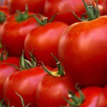 Arancel al tomate está matando a la industria