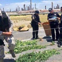 Aseguran plantío de mariguana en refinería de Pemex