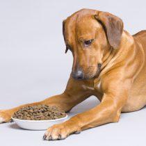 Descubre la magia detrás del alimento balanceado para mascotas
