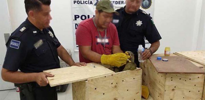 Matan a monos capuchinos bebés y osos perezosos, en Chiapas