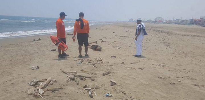 Rescata Semar a una persona en playas de Veracruz