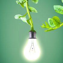 Egresados de la UAM generan energía eléctrica a partir de plantas