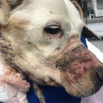 Dueña de perro maltratado miente y dice que lo rescató