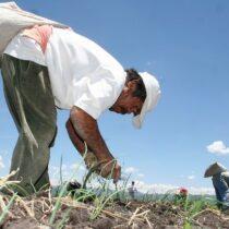 Sin fertilizante se corre el riesgo de hambruna en el Estado de México