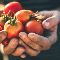 México suspende provisionalmente el envío de trabajadores agrícolas a Canadá