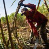 Pequeños productores agrícolas, abandono gubernamental