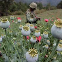 Cultivo de amapola cae en México, mantiene producción droga sintética: EEUU