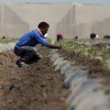 Trabajadores temporales, los más expuestos al Covid-19: FAO