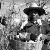 Presupuesto 2021, descuido al sector agrícola y el medio ambiente