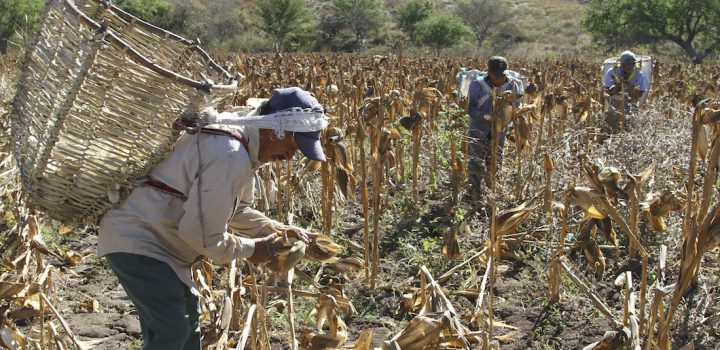 Campo en crisis, se reduce 76% de zonas cultivables
