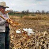 Desaparición de fideicomisos recortaría 13 mmdp al campo mexicano: GCMA