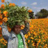 Campo mexicano en una de sus peores crisis económicas