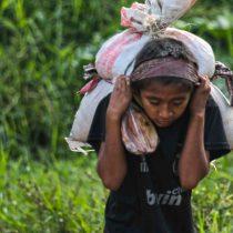 Pandemia podría obligar a 300 mil niños de América Latina a trabajar: OIT