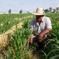 Comercio agroalimentario cerró 2020 con alza de casi 40%