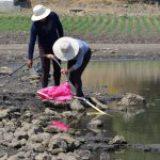 Sólo 14.88% del país está libre de sequía: Conagua