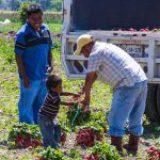 El trabajo infantil aumenta en el mundo por primera vez en dos décadas, reporta la OIT