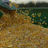 México gastó 2.9 mil mdd en importar maíz, trigo, frijol y huevo en cinco meses, un 51% más que en 2020