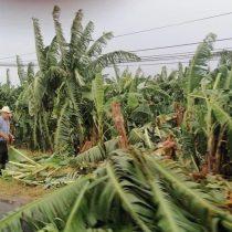 Productores de San Rafael afectados por el huracán 'Grace' piden apoyo para recuperar sus cultivos