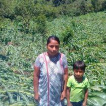 Destruyen fuertes lluvias y vientos, cultivos de maíz en pueblos de Guerrero