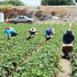 Aumento de importaciones alejan a México de la autosuficiencia alimentaria: CNA